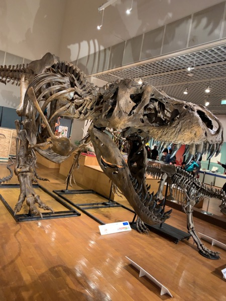 本日の博物館