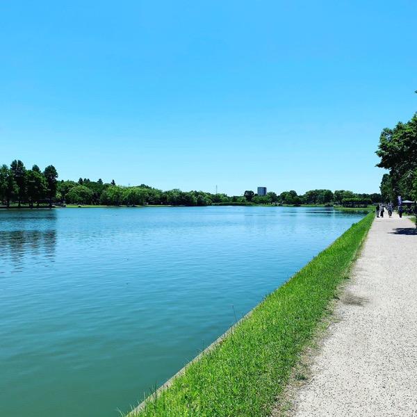 本日の水元公園
